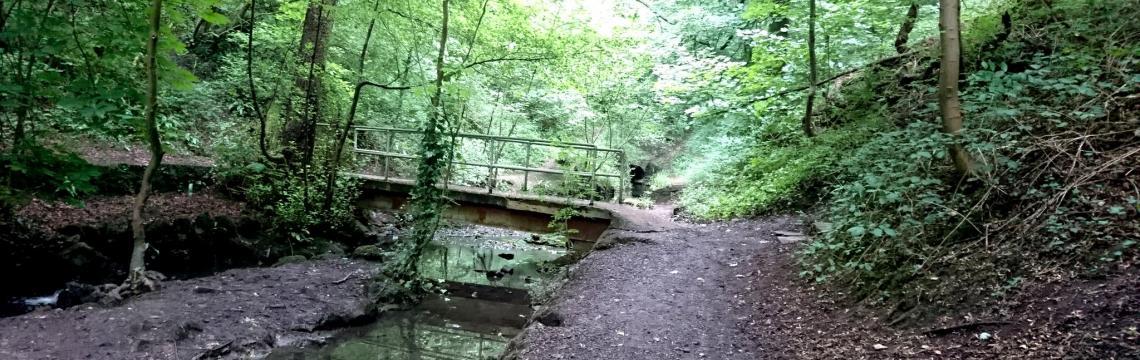 Troopers Hill, Bristol - woods and footbridge